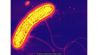 终极节食!科学家发现部分细菌可以仅靠食用和